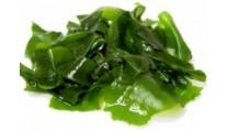 Что полезно знать о водорослях?