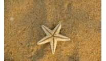 Главный сувенир из отпуска это… песок
