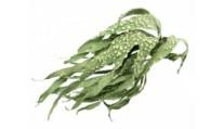 10 Способов применения водорослей